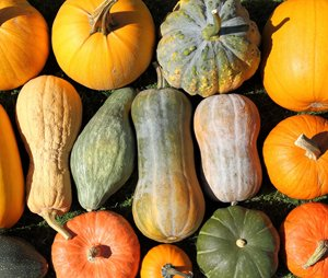Squashes & Pumpkins